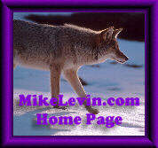 Go to MikeLevin.com Home Page